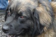 winterwanderungderbgam26-02-201215