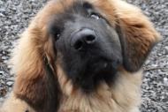 winterwanderungderbgam26-02-201216