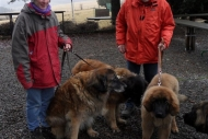 winterwanderungderbgam26-02-20125