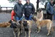winterwanderungderbgam26-02-20127