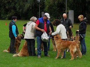 Uwe mit den Junghunden